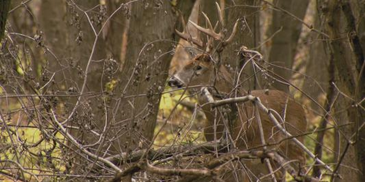 Keeping deer away from your landscape