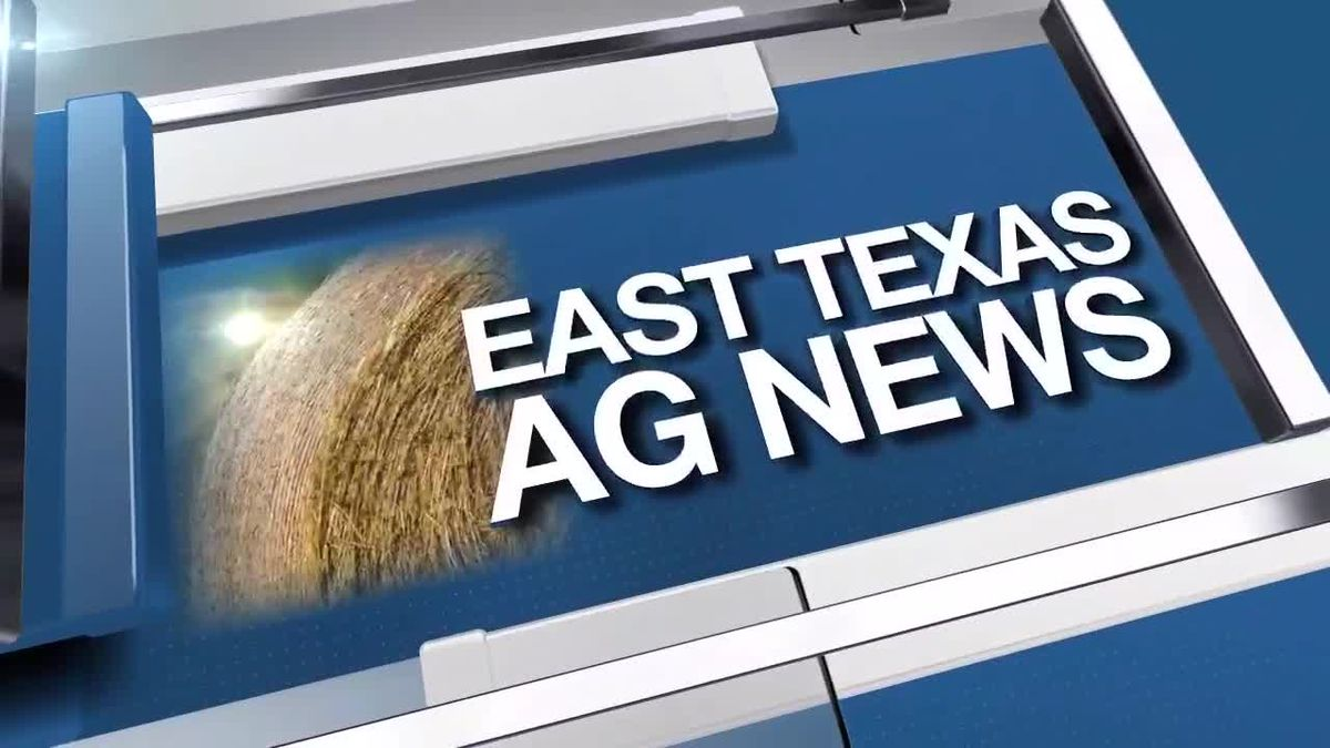 East Texas Ag News: Cattle prices higher this week