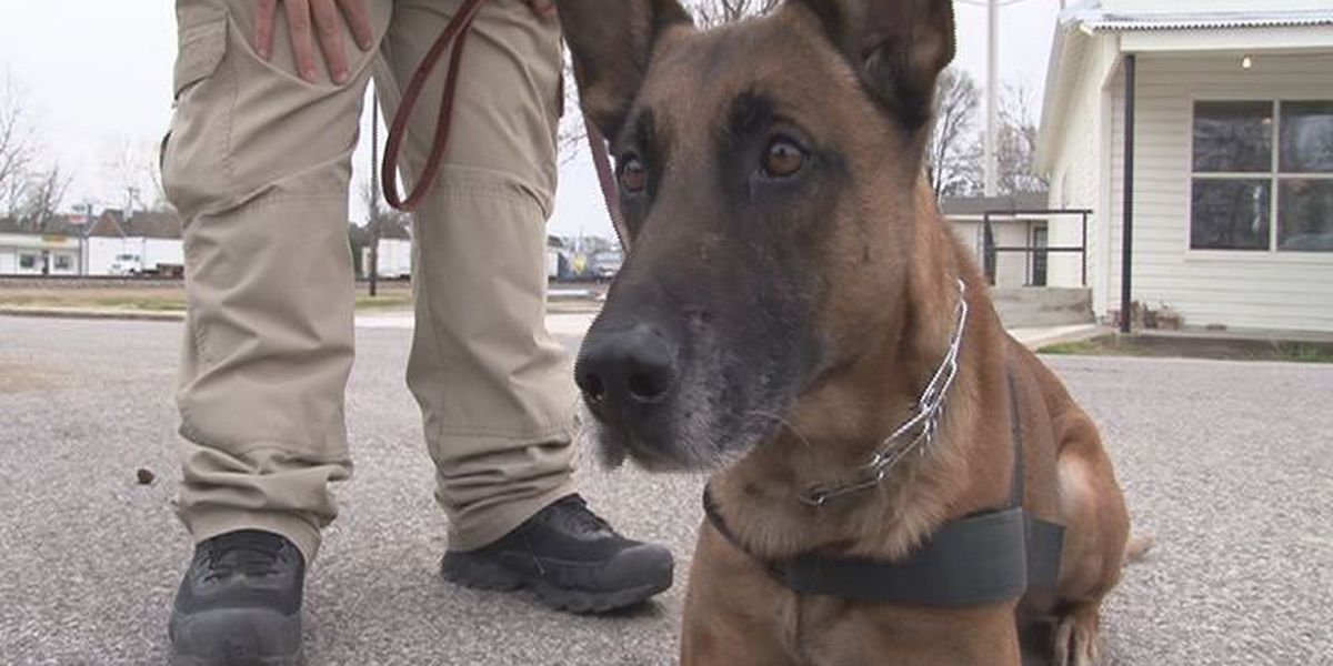 East Texas law enforcement say K-9s play a vital role