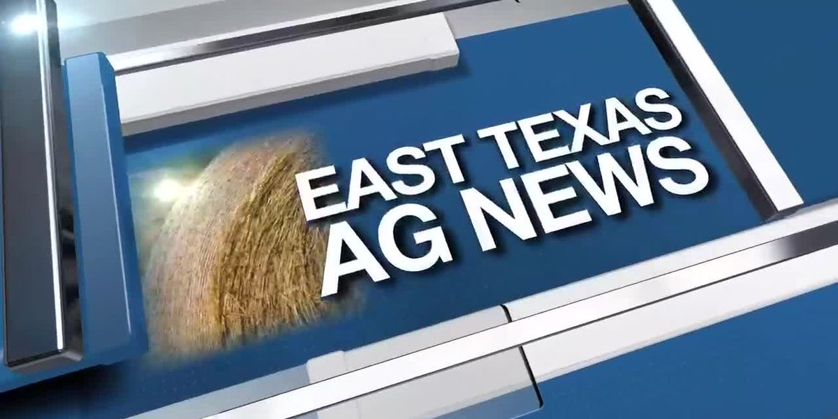 East Texas Ag News: Hay prices steady to firm this week