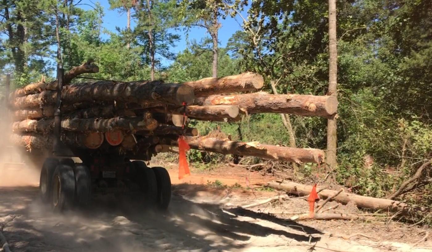 Salvage operation underway at Davy Crockett National Forest