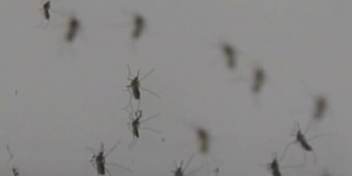 City leaders across East Texas share differing approaches to mosquito mitigation