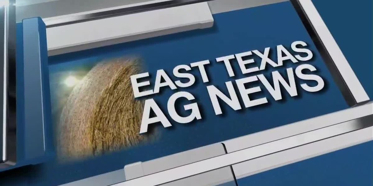 East Texas Ag News: Recent cold snap, drought affecting hay supplies
