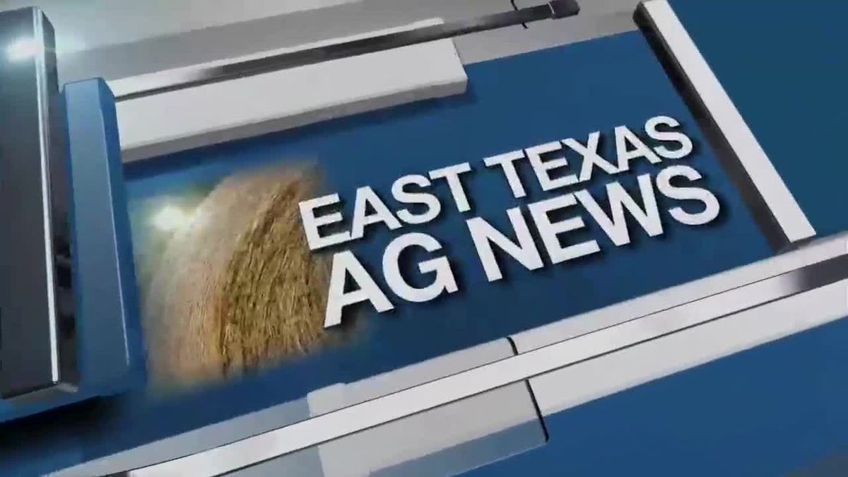 East Texas Ag News: Hay prices firm to higher for the week