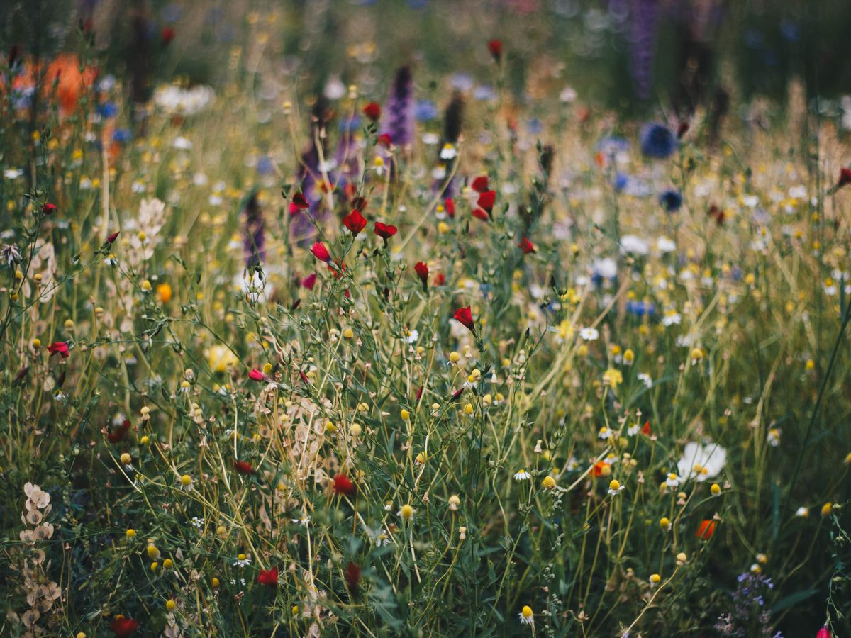 East Texas Ag News: Save summer seeds for spring wildflower planting