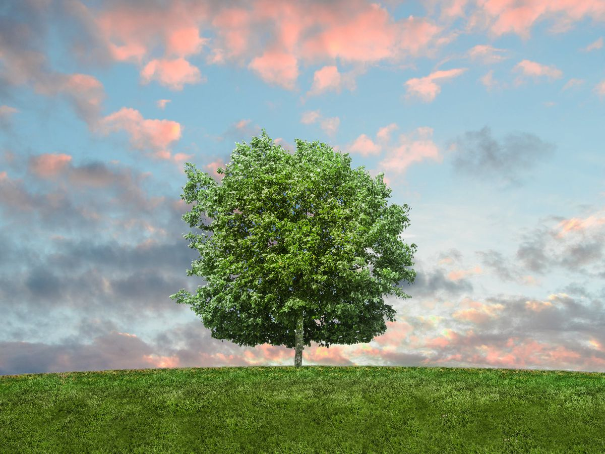 East Texas Ag News: Planting trees best done in the fall