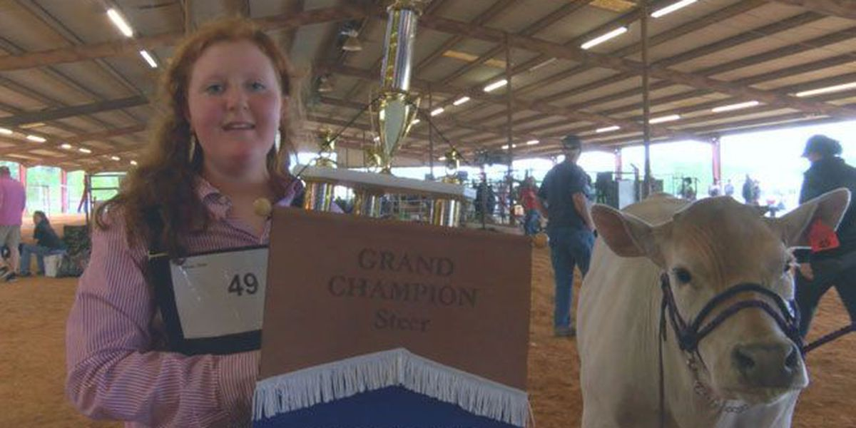 Garrison, Douglass girls' calves win top honors at Nacogdoches Jr. Steer Show