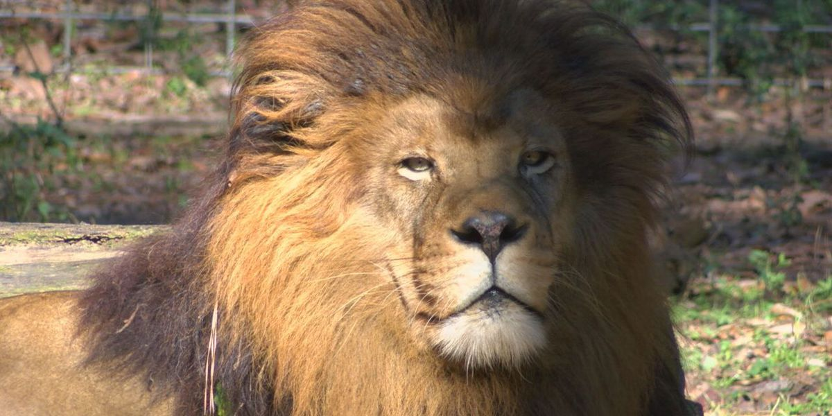 At 50 years old Ellen Trout Zoo looking to future