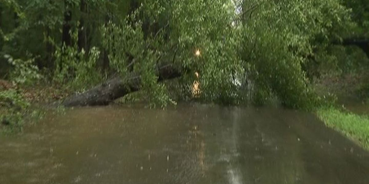Tree down, flash flooding, VA clinic closing in Angelina Co. from tropical storm