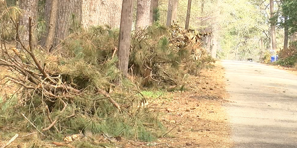 City of Nacogdoches officials plan brush collection pickup to start on Monday