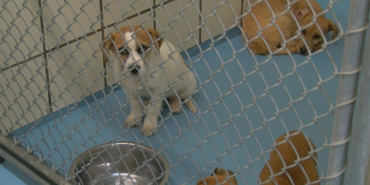 Local animal shelter see decrease in animals being returned