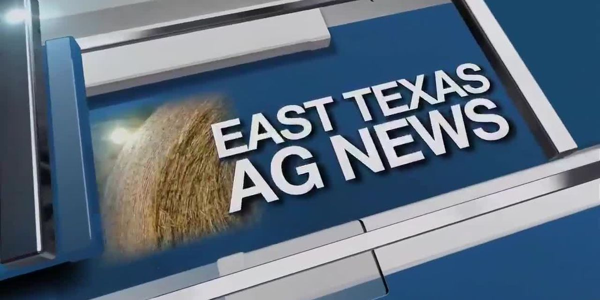 East Texas Ag News: Hay prices remain firm this week