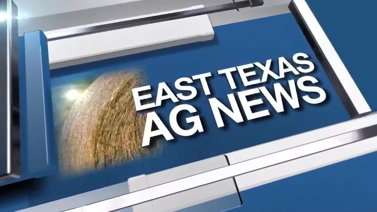 East Texas Ag News: Birds are showing up at the feeders