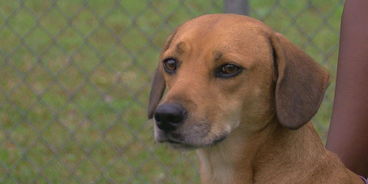 Von is ready to move out of the Nacogdoches Animal Shelter