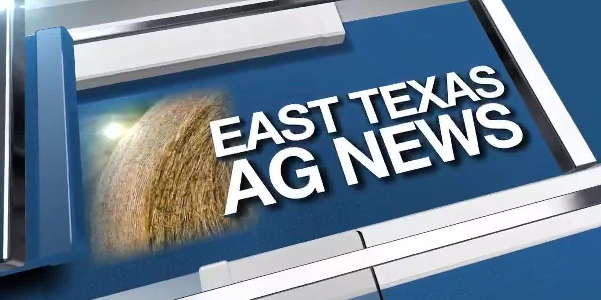 East Texas Ag News: This week's cattle prices