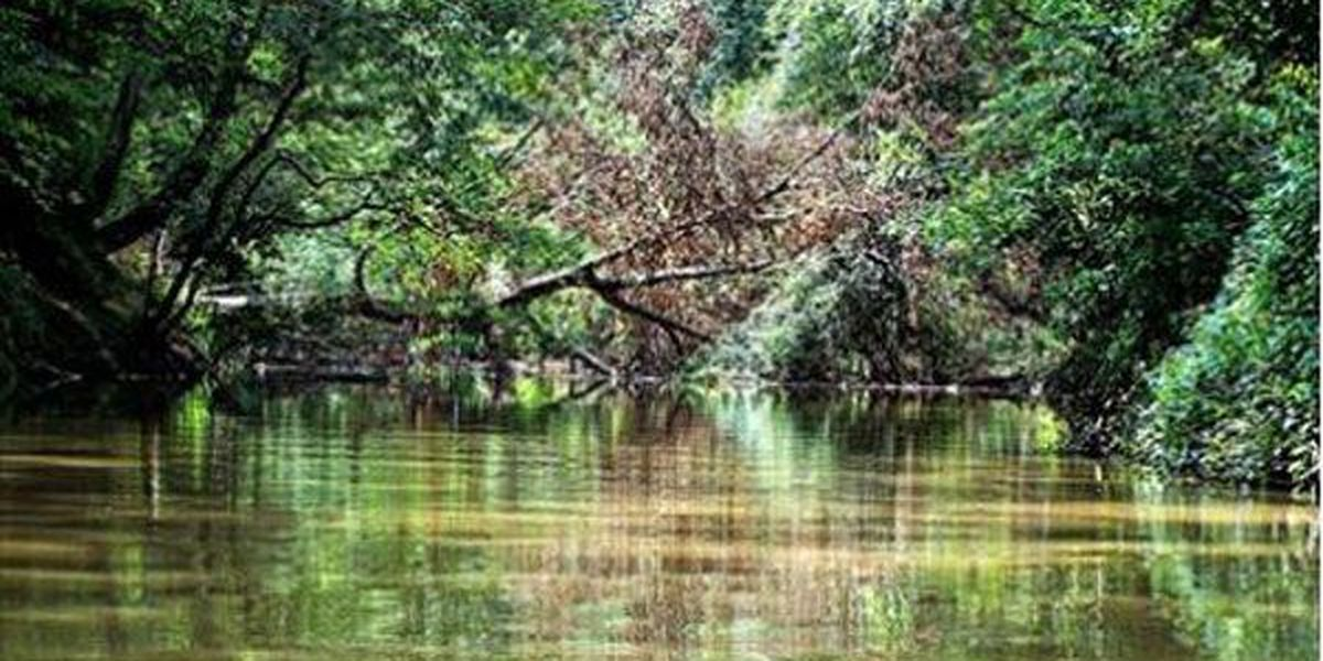 Attoyac Bayou Watershed Partnership offering assistance to repair or replace septic systems