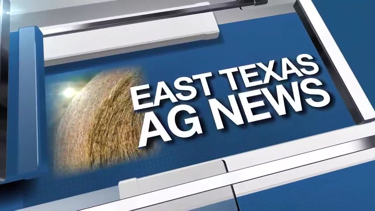 East Texas Ag News: This hay prices steady to firm throughout Texas