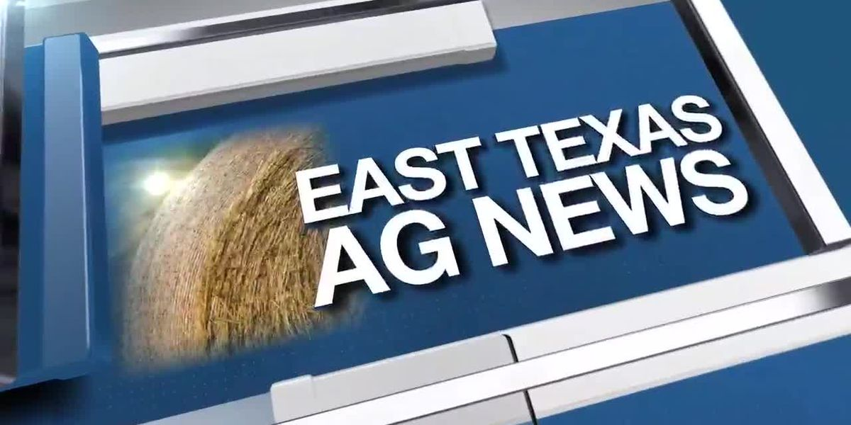 East Texas Ag News: Cleaning up your vegetable gardens