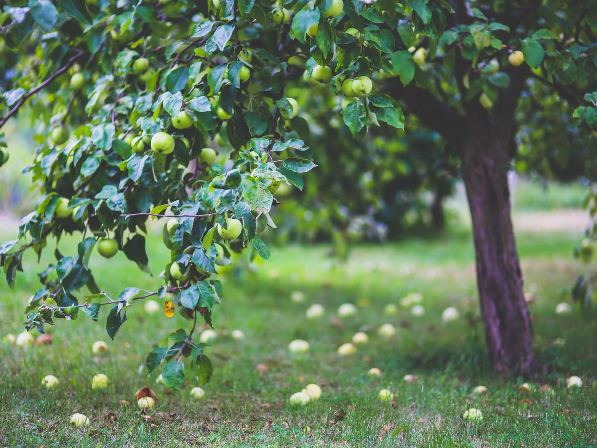 East Texas Ag News: Best time to prune fruit trees