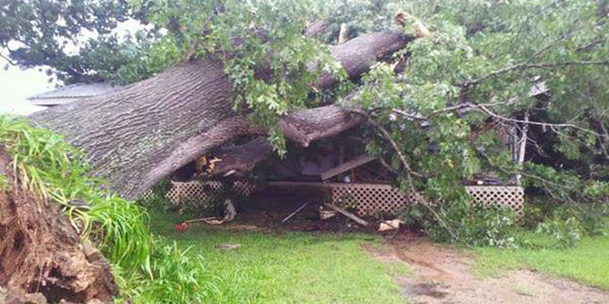 100-year-old tree crushes house in Woden; No one hurt