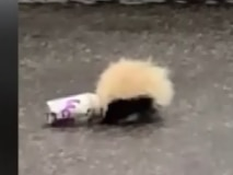 Officer praised after saving skunk stuck in cup