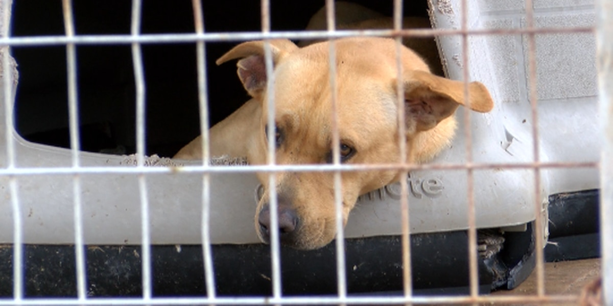 East Texas authorities continue investigation into troubled animal shelter