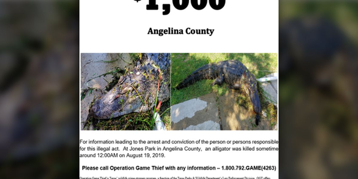 Angelina County game wardens searching for suspect who shot, killed alligator