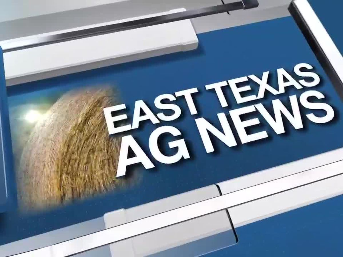 East Texas Ag News: Cattle prices weaker this week