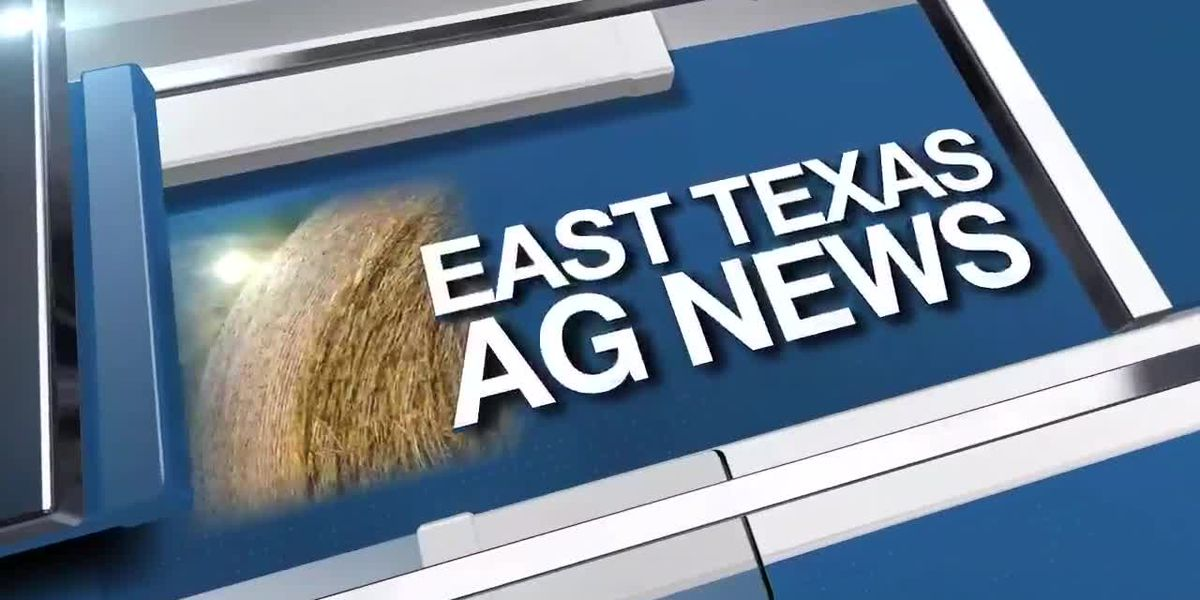 East Texas Ag News: This week's cattle prices higher compared to last week