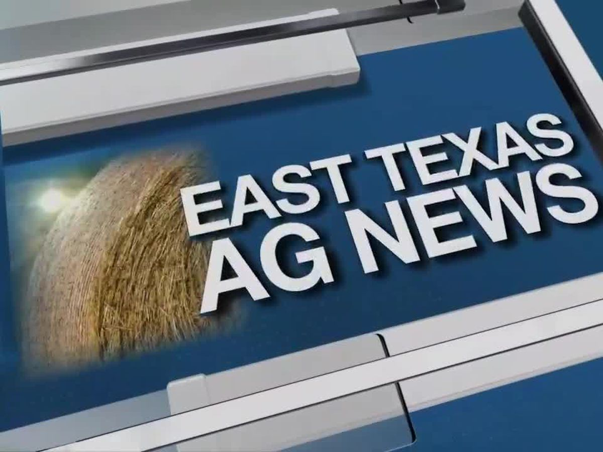 East Texas Ag News: Prices vary in this week's livestock report