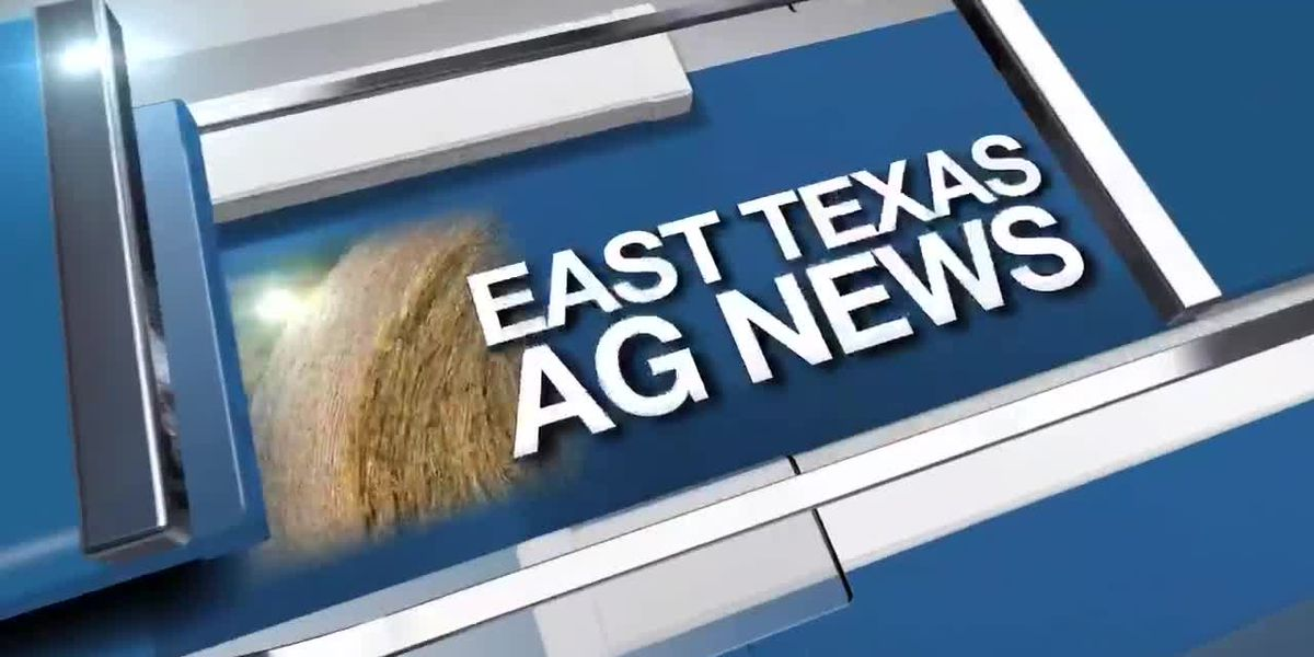 East Texas Ag News: This week's hay prices