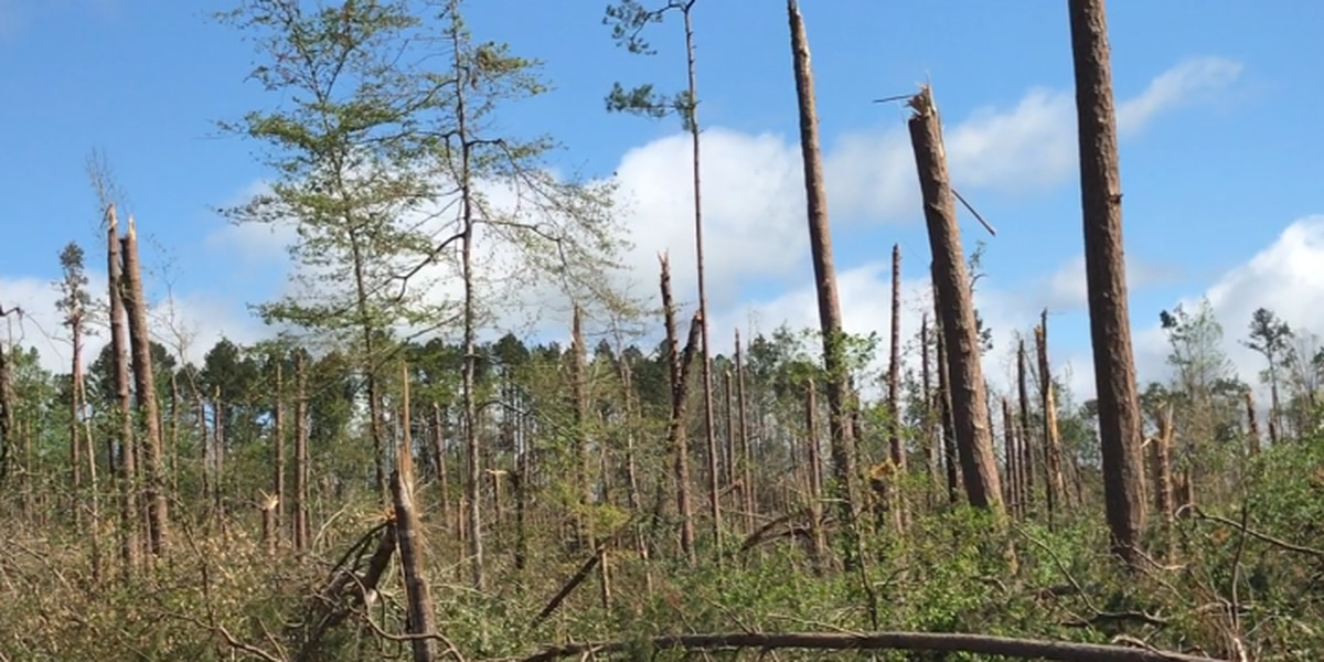Thousands of acres of damaged Davy Crockett National Forest to be harvested after tornadoes