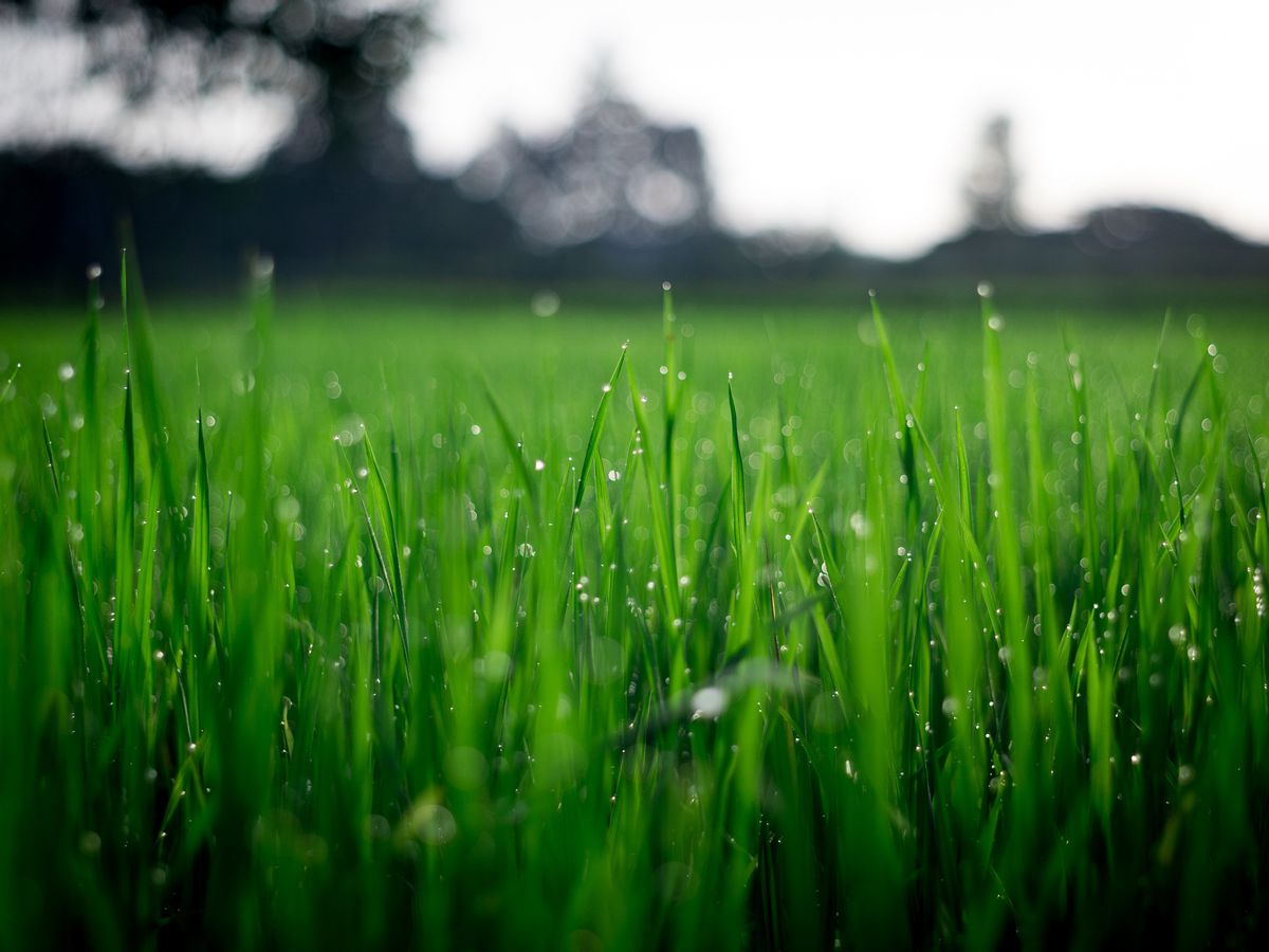 East Texas Ag News: It's time to start fertilizing those lawns
