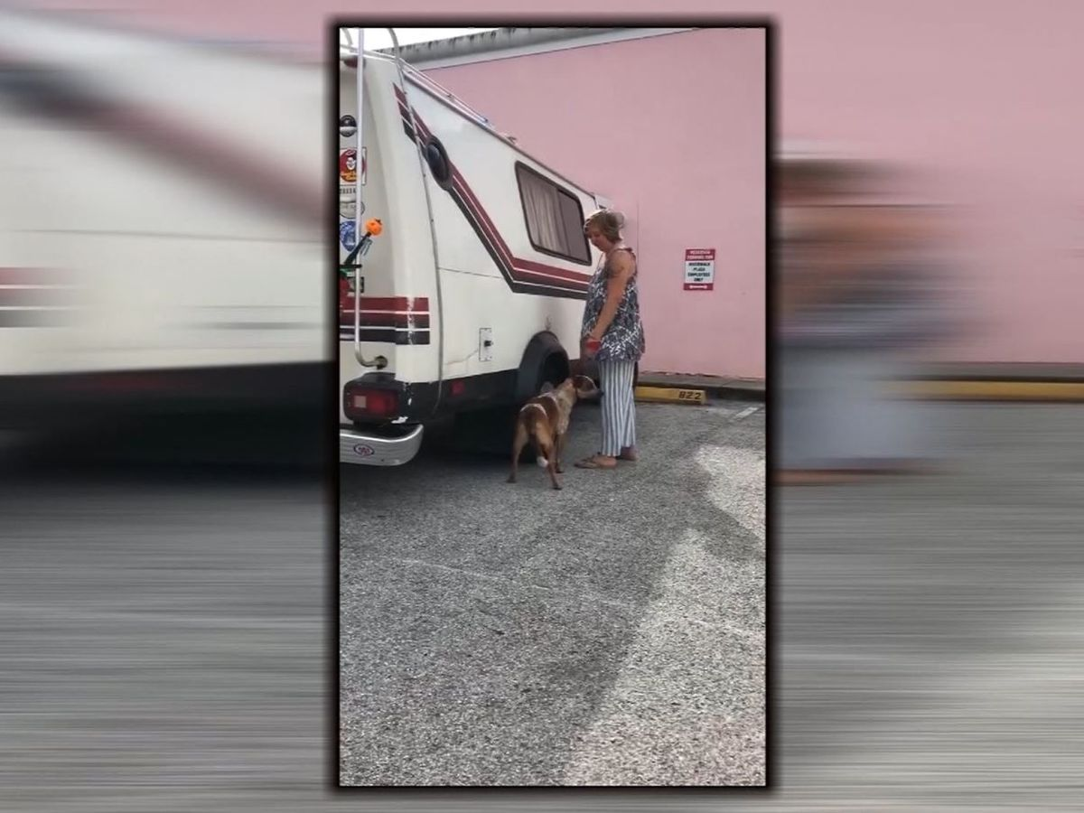 Florida woman faces animal cruelty charge after viral video