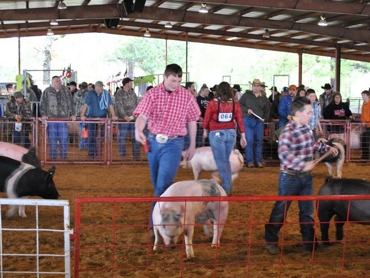 Angelina County Fair canceled due to COVID-19 fears: 'We must all be part of the solution, not the problem'