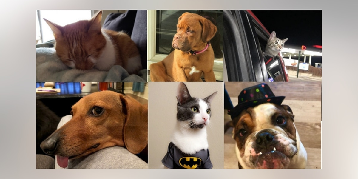 PHOTOS: East Texas critters show up, show off for 'National Pet Day'