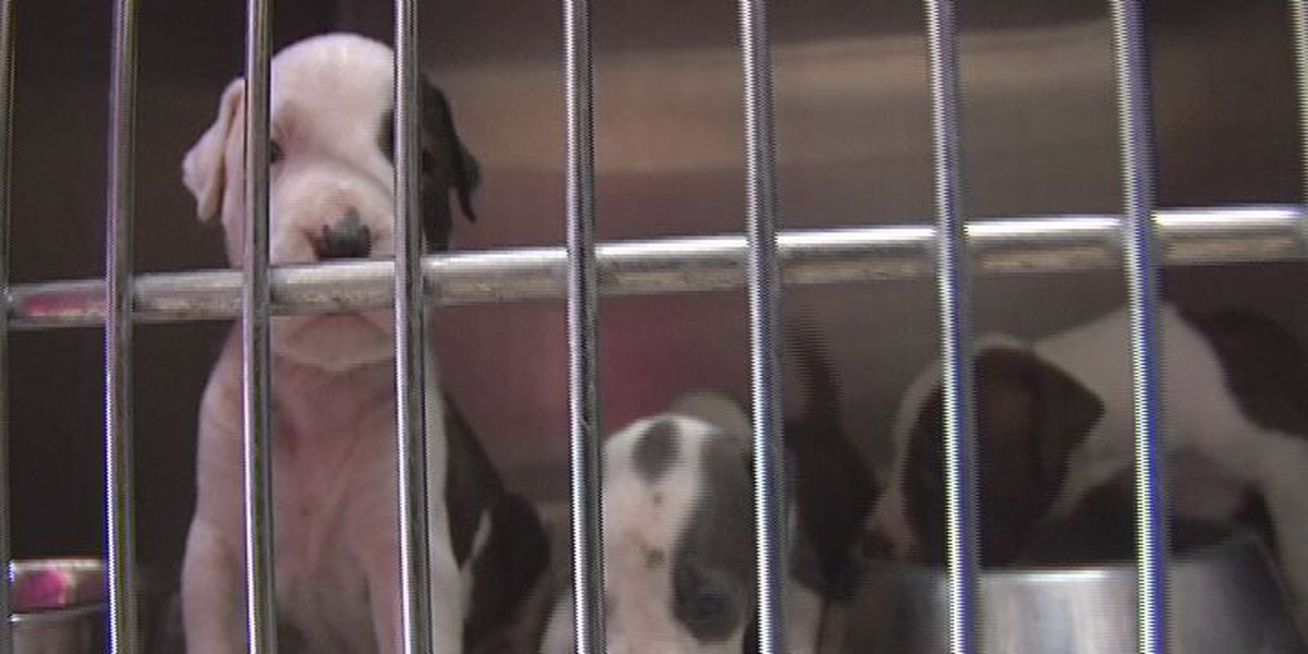Happy ending for 5 Hudson puppies