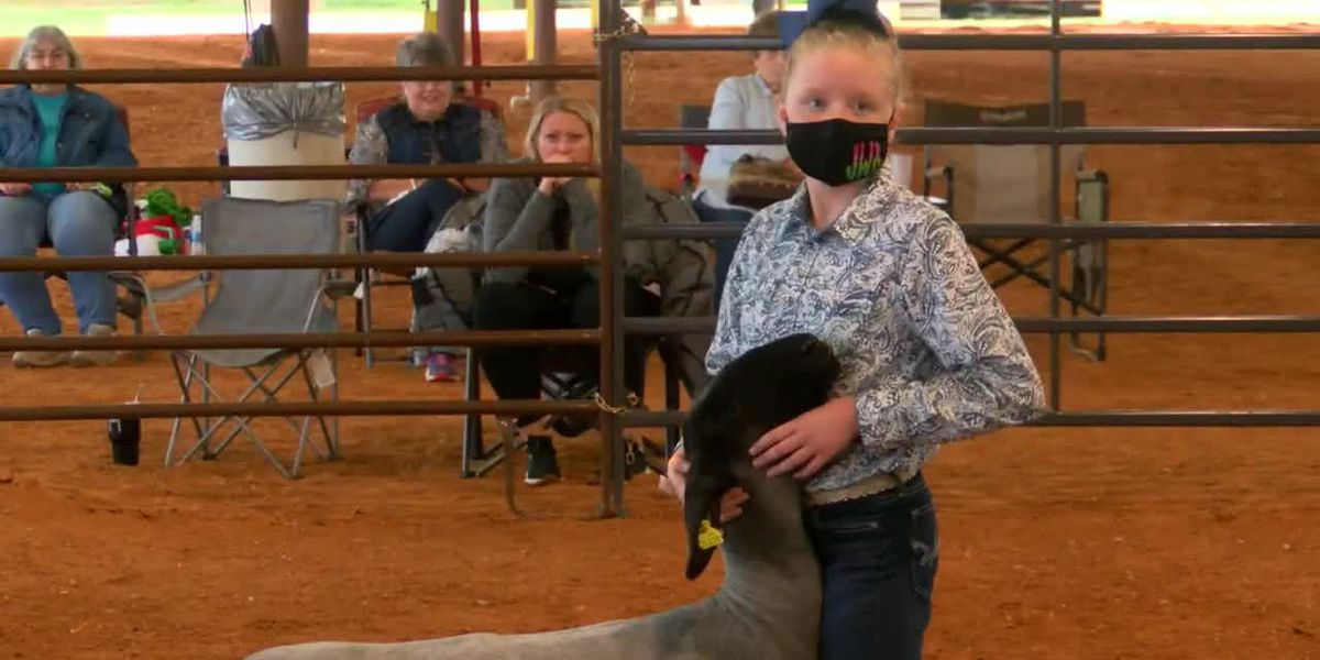 Nacogdoches County students show livestock during drastically different Piney Woods Fair
