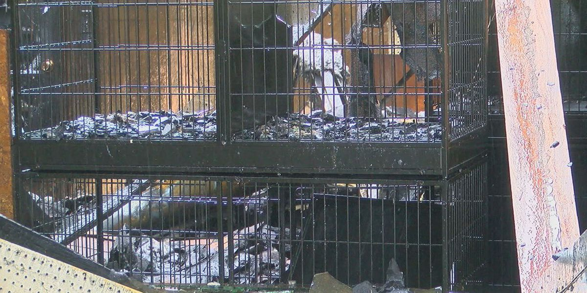 Animals killed after Jasper pet store catches on fire