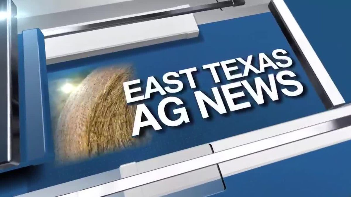 East Texas Ag News: Tips on which leaves to use to build up soil