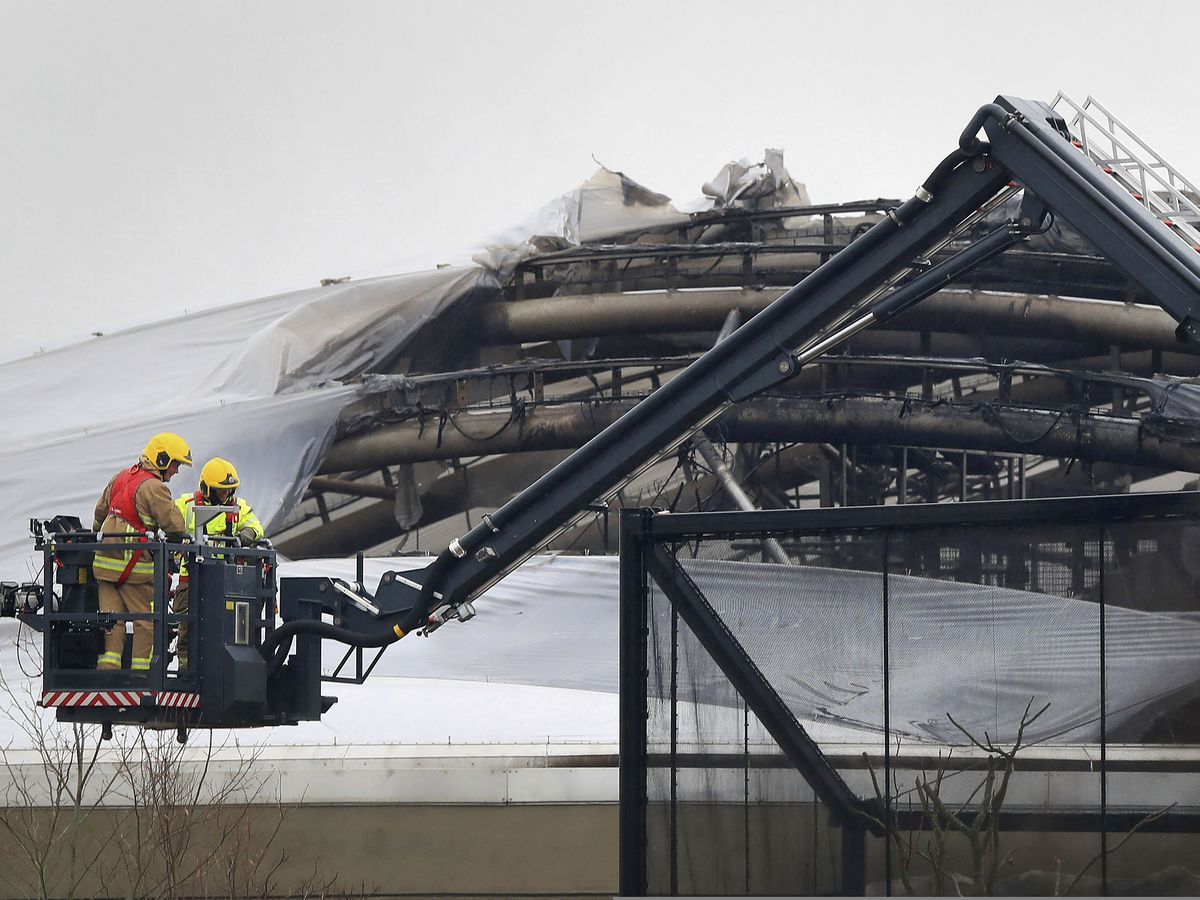 Frogs, fish and small birds die in English zoo fire