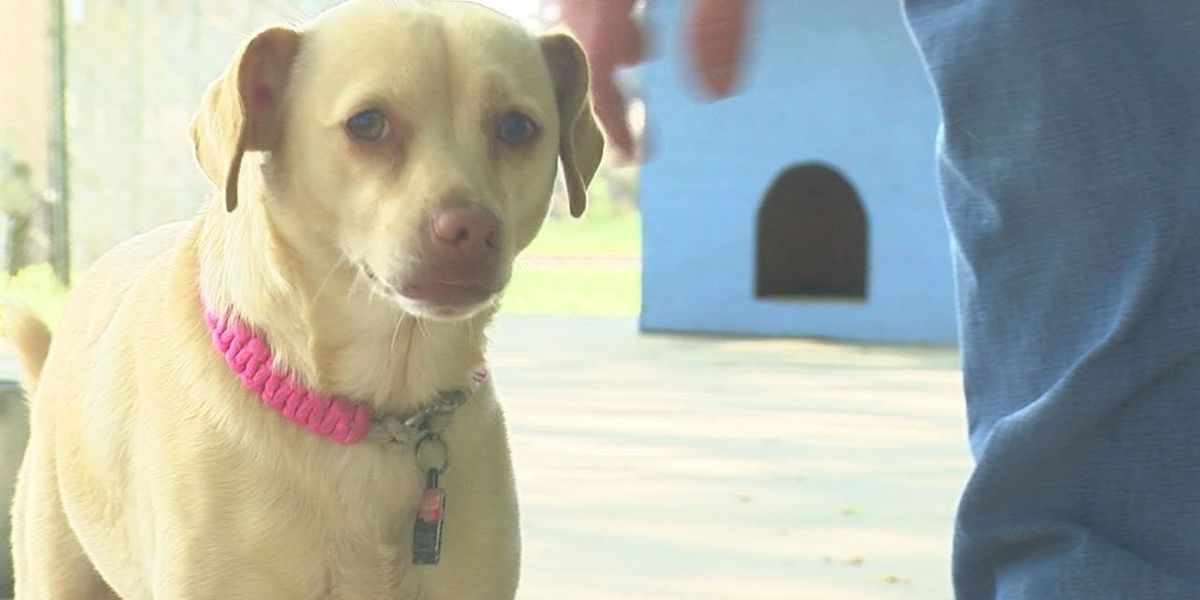 Penny looking for love and a new home