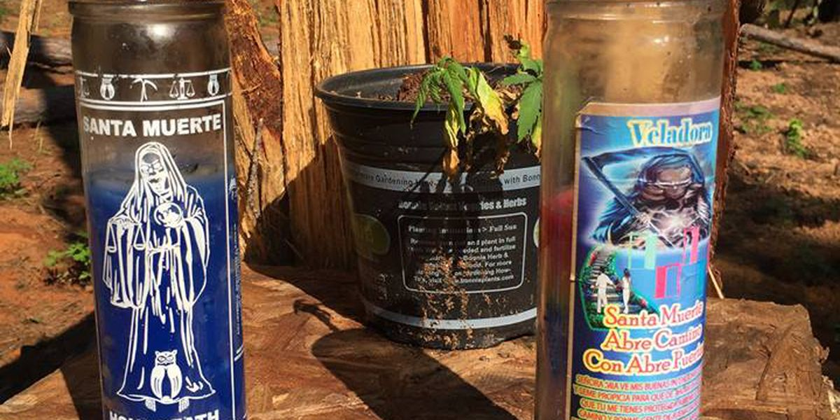 Sabine Co. authorities: Items found at pot farm possibly linked to Mexican cartel