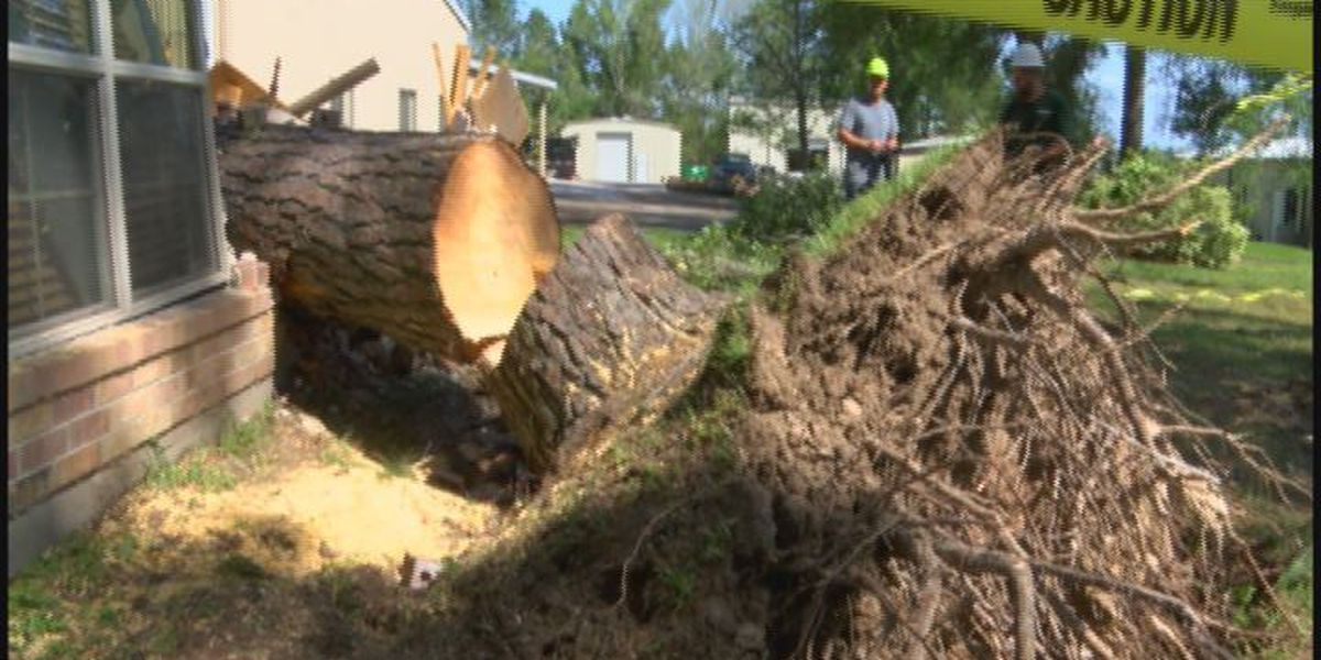 Tree crashes through Livingston home, nearly misses two sleeping priests