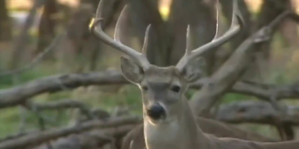 Hunters load up for final week of East Texas deer season