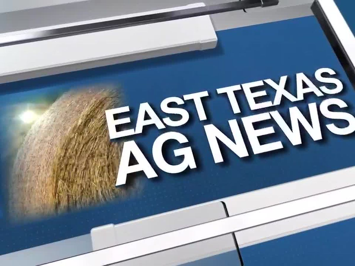 East Texas Ag News: This week's cattle and hay numbers
