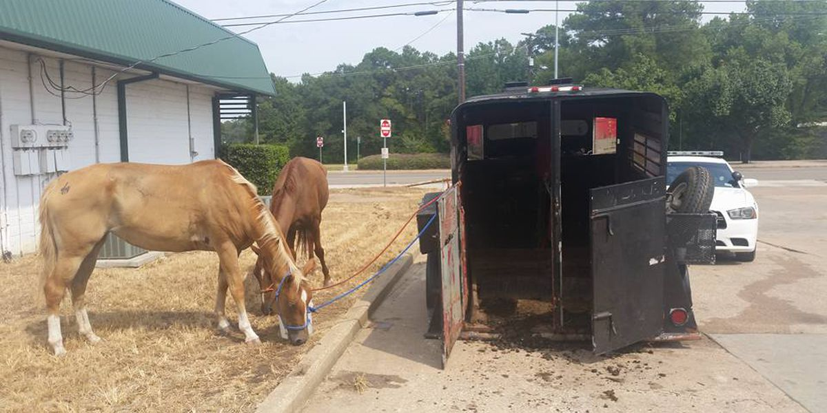 Diboll Police investigating abandoned horses