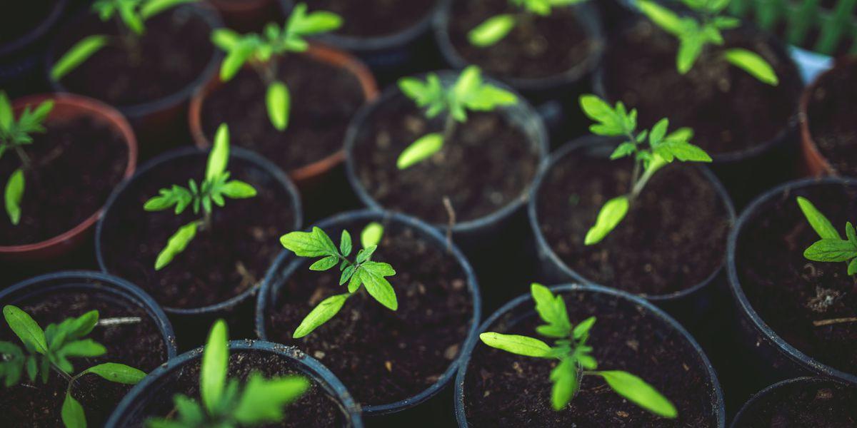 Ag News: Garden options for the first-time gardener