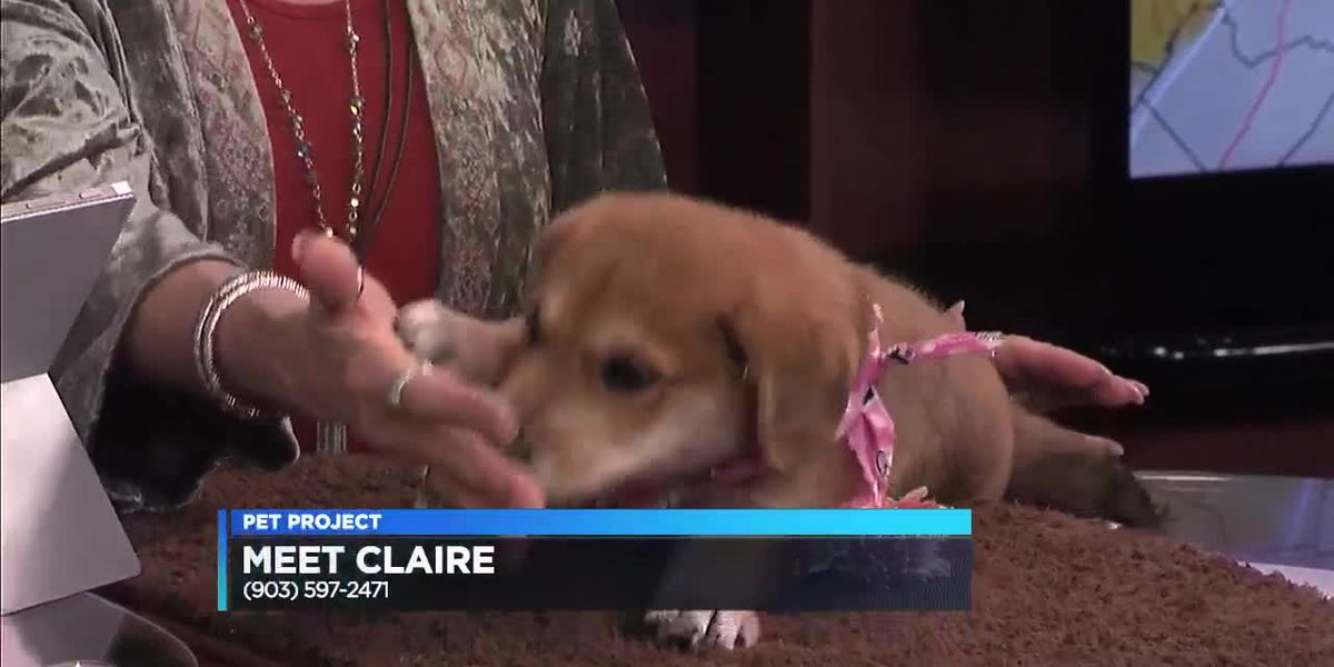 Pets for People: Claire