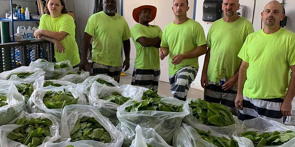 Angelina County Sheriff's Office utilizes garden to help inmates